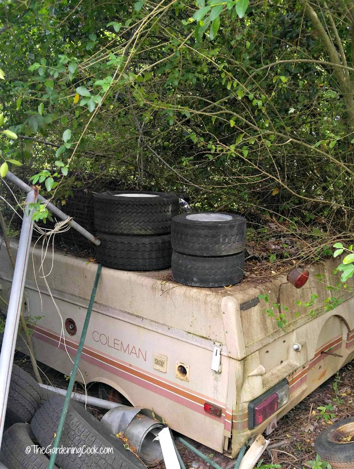 This camper with tires and shrubs is a perfect spot for invasive pests.