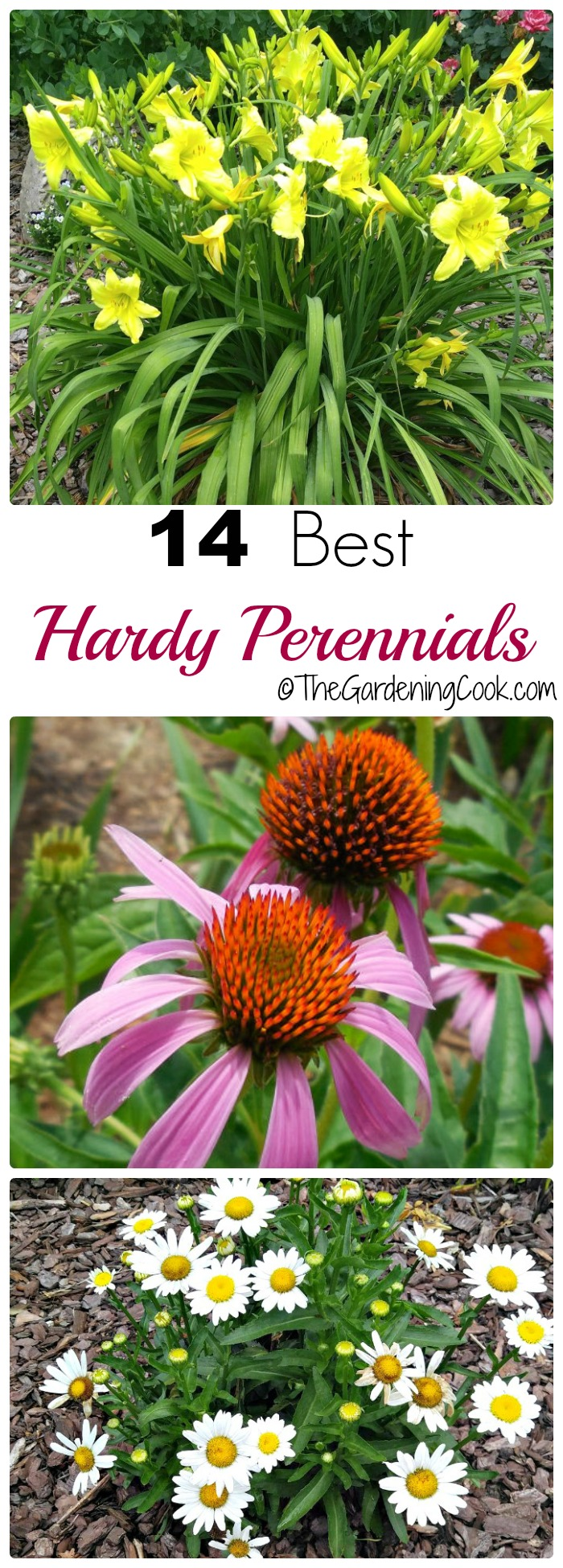 Hardy perennials are those that will take a freeze and come back for at least three seaons. These are my top 14 picks that will almost all grow from Maine into the deep South. thegardeningcook.com
