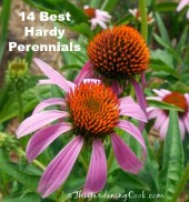 14 of my favorite hardy perennials