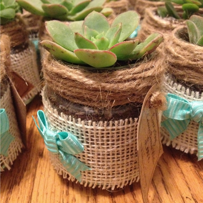 This sweet planter is made with burlap, jute and ribbon and planted with a succulent