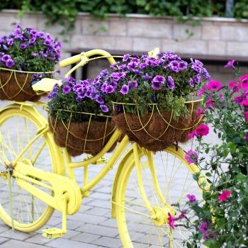 Creative Gardening Category