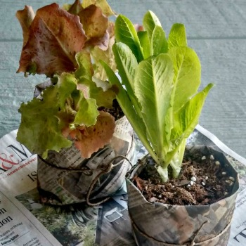 Garden DIY Category