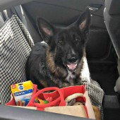 10 Tips for a Successful Dog Road Trip