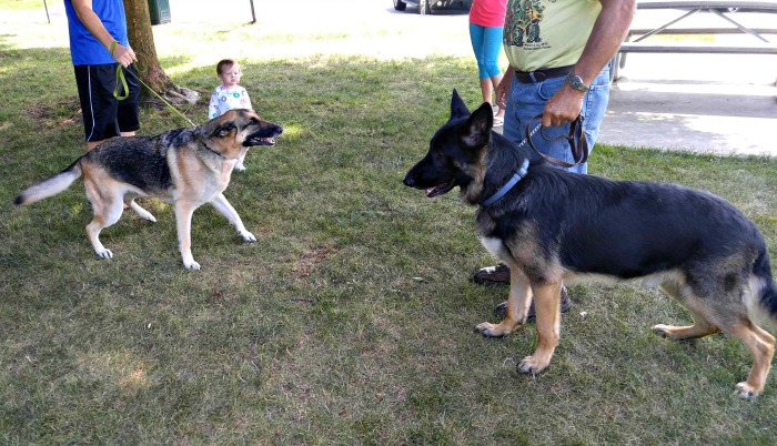 Take time to introduce the dog to other dogs you meet along the way