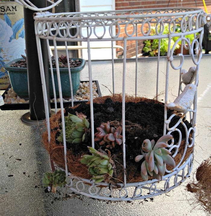Lay plants sideways for best effect
