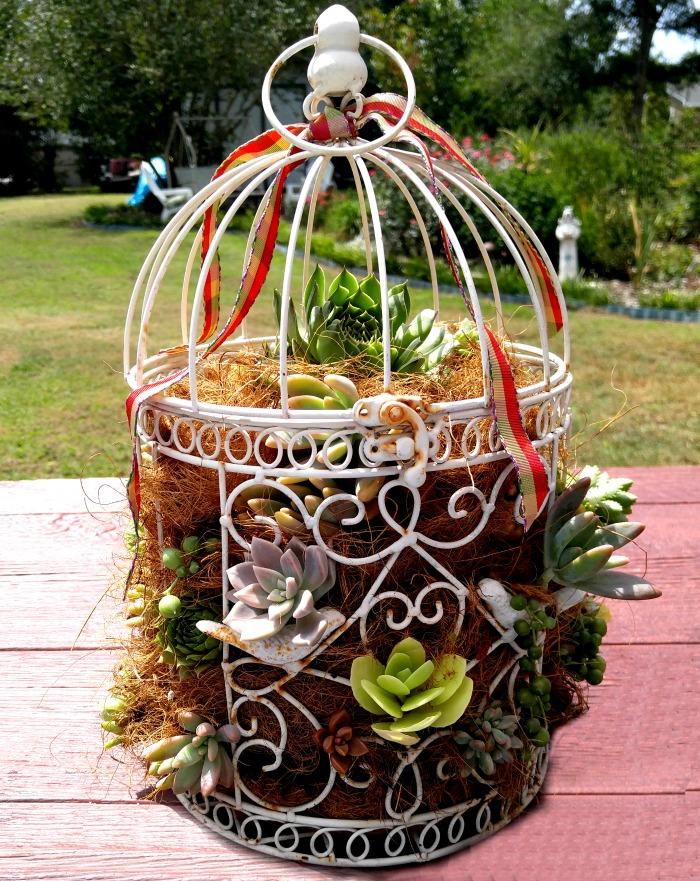 succulent-bird-cage-planter