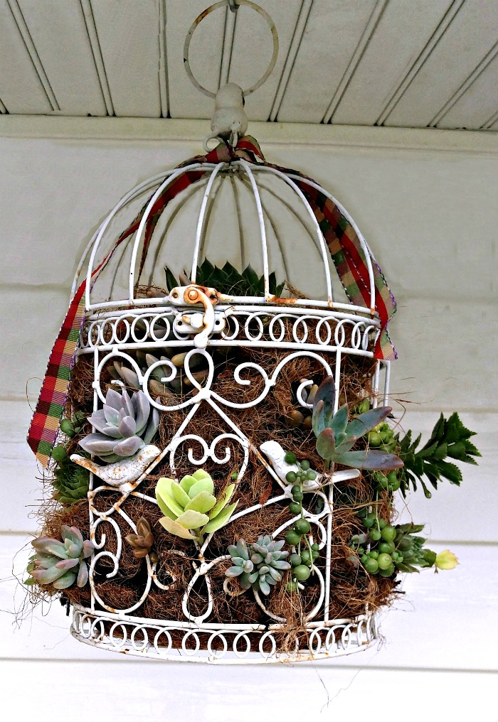 This succulent-bird-cage-planter looks great hanging outside