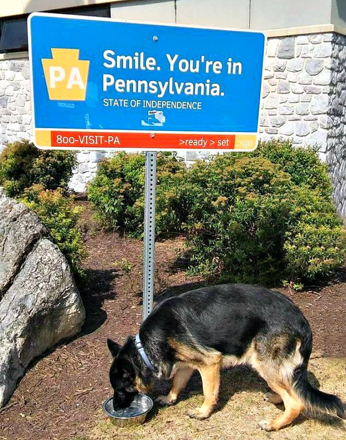 Be sure to visit rest areas to give Fido a break from the car ride.
