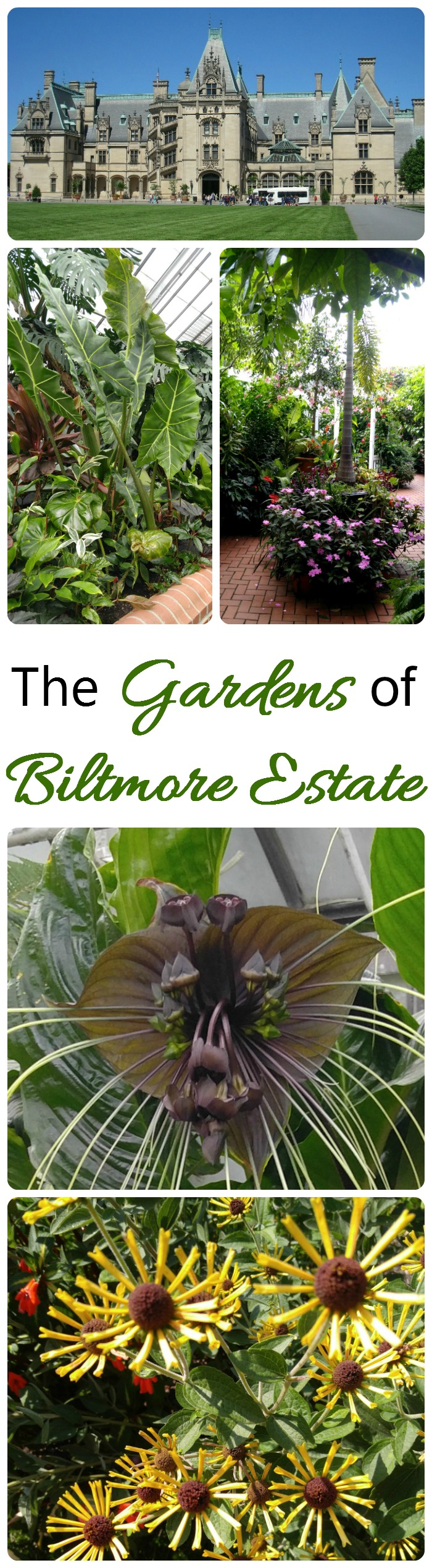 Biltmore Estate Gardens are even more impressive than the home itself. There are dozens of large garden beds and many greenhouses which are in flower year round.