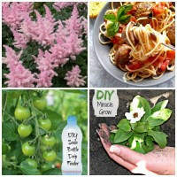See what made the list of the most famous posts of 2016 for The Gardening Cook. This year, household tips, gardening tips and one great recipe made the top 10!