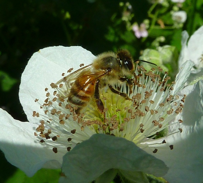 Open pollination happens naturally with bees, birds and the wind.