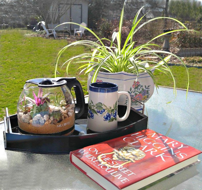 Coffee pot Terrarium and a sunny day outside.