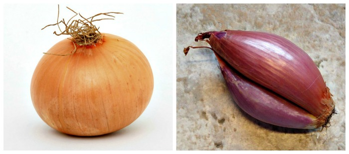 One of the biggest differences between an onion and a shallot is the shape.