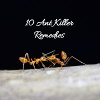 Effective, Natural Ant Killer Remedies
