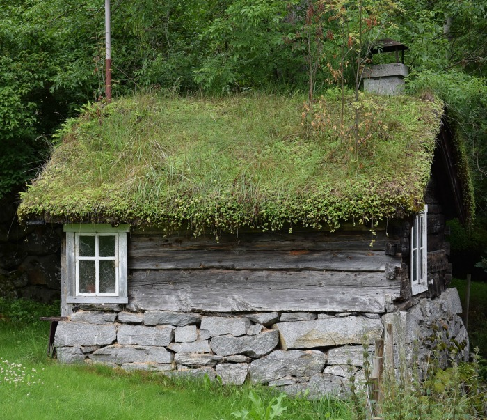 Plant the entire roof of a Garden Shed for a rustic look.
