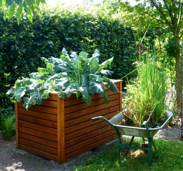 Vegetables can be grown in all types of containers. Raised garden beds, planters and even wheelbarrows will work.