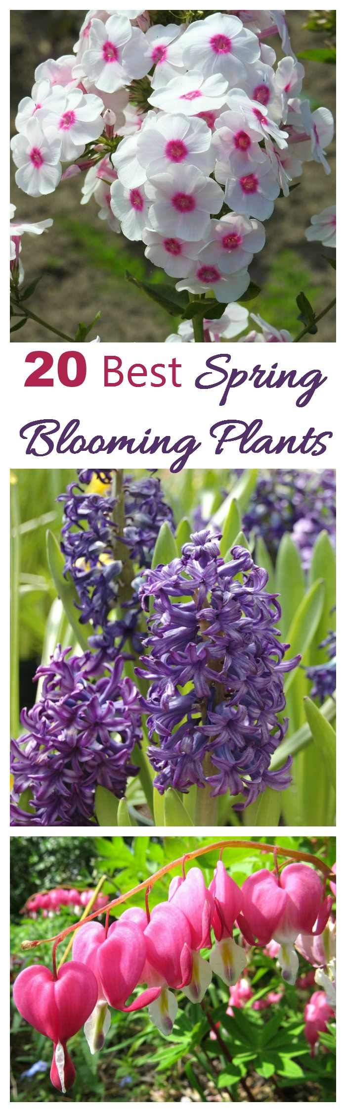 Spring blooming plants my 20 top picks for early spring flowers - Flowers that bloom from spring to fall ...