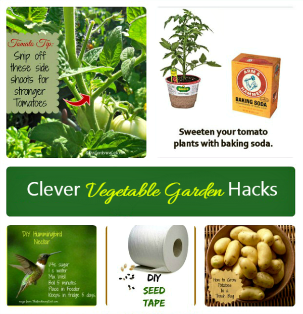 These vegetable gardening hacks are creative and fun things to do.
