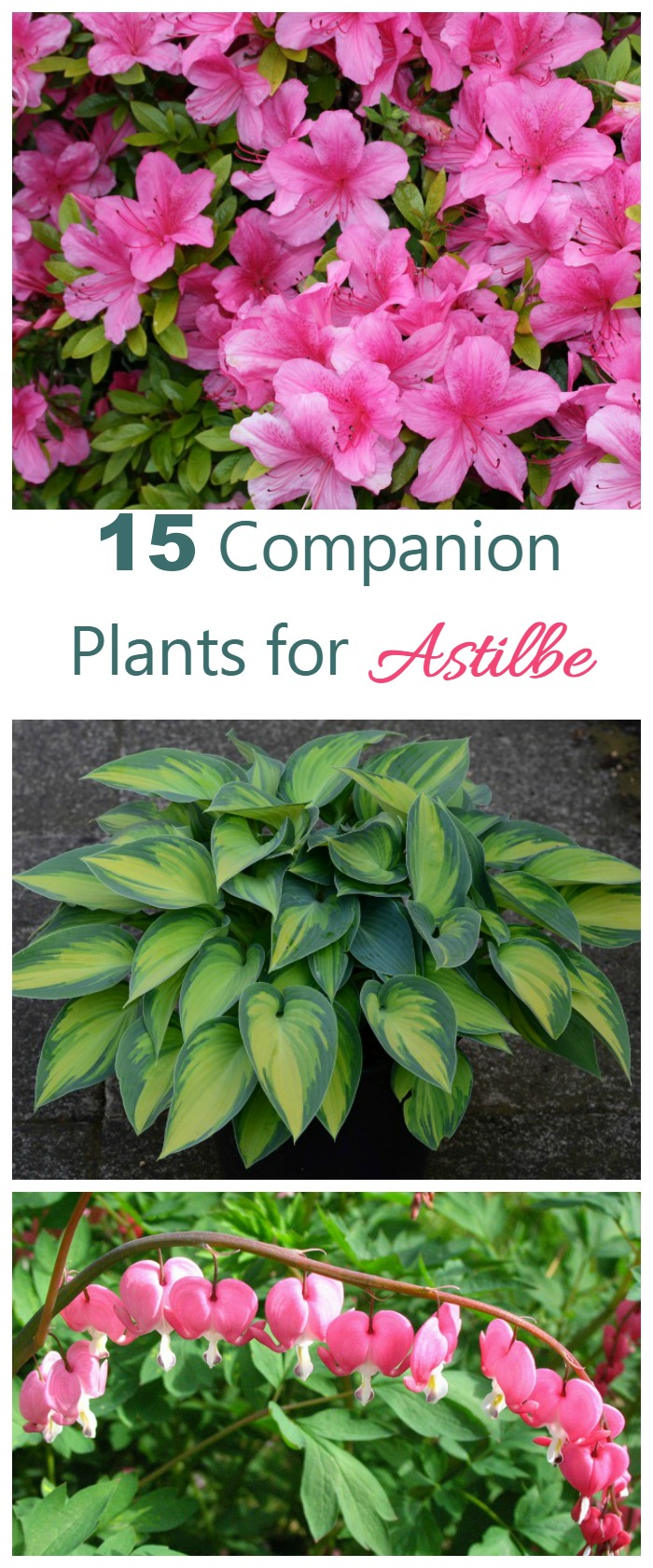 These 15 perennials and annuals make great astilbe companion plants. Most love the same shade and moisture requirements and make a great looking garden bed.