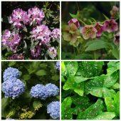 Companion plants for astilbe