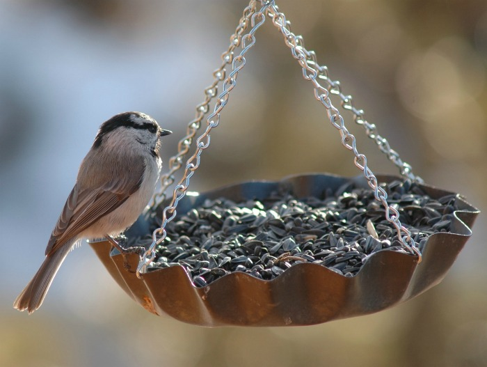 Clean up around bird feeders