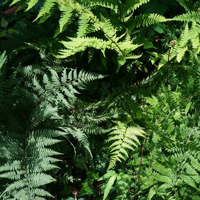 Ferns like shady, well draining soil.