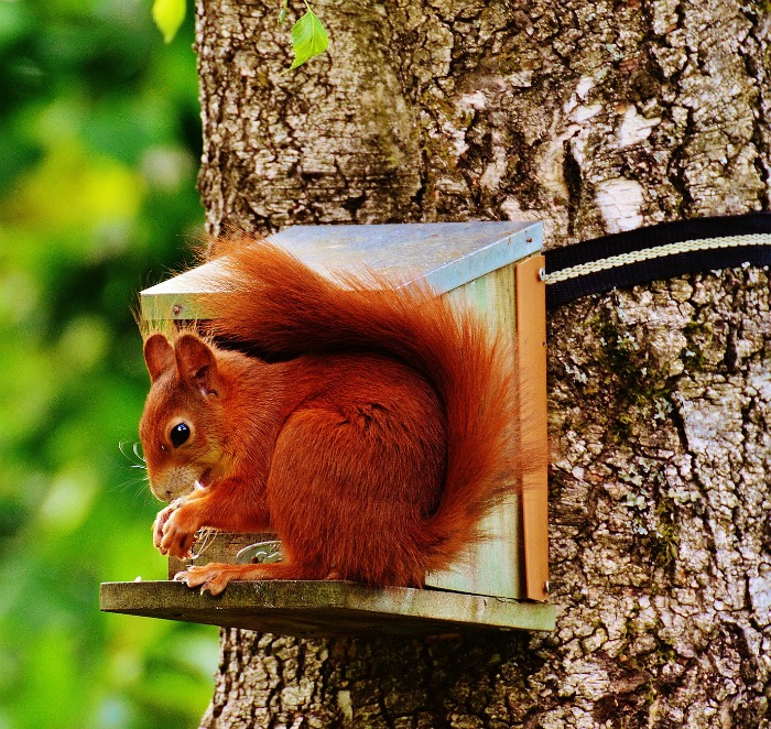 Set up a feeding station for squirrels far away from your veggie garden