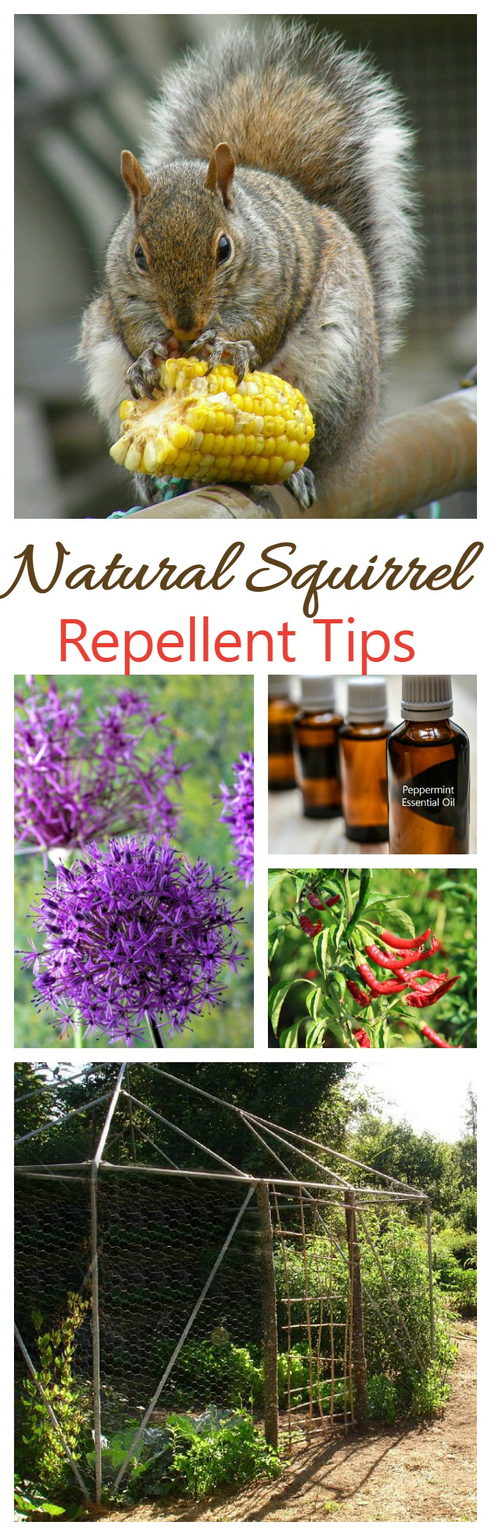 These 12 natural squirrel repellent ideas will do the job of keeping squirrels out of your yard and away from your vegetables.