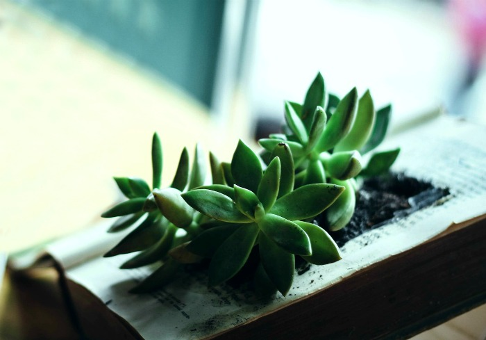 Succulent book planter