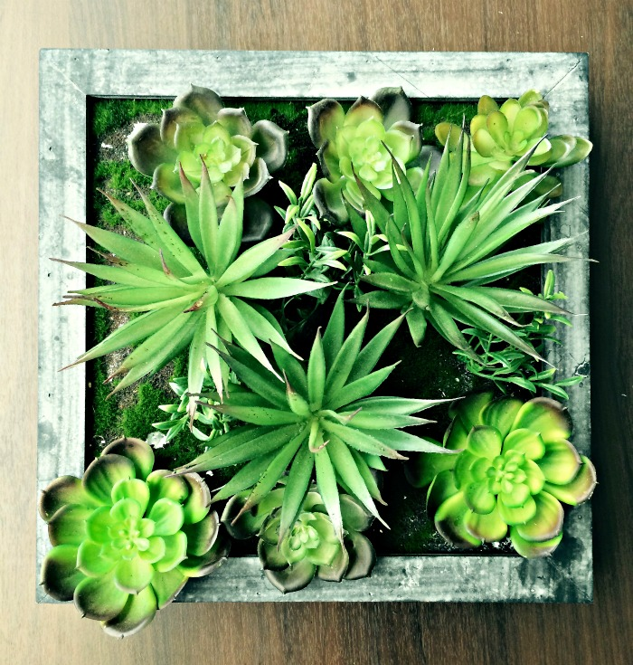 Succulent box planter