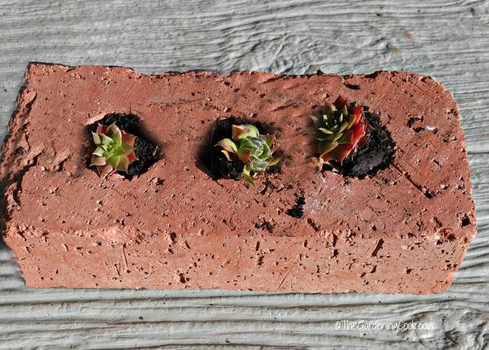 Succulent brick planter