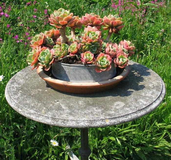 Succulent spring form pan planter