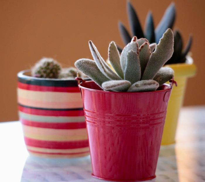 Colorful Succulent planters