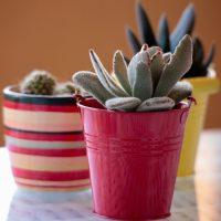 Bright Succulent planters