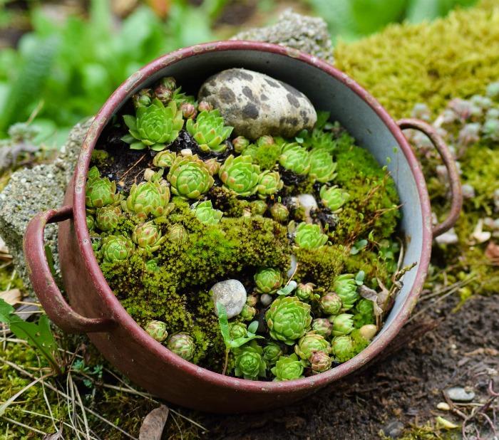 Dutch oven unique Succulent planter