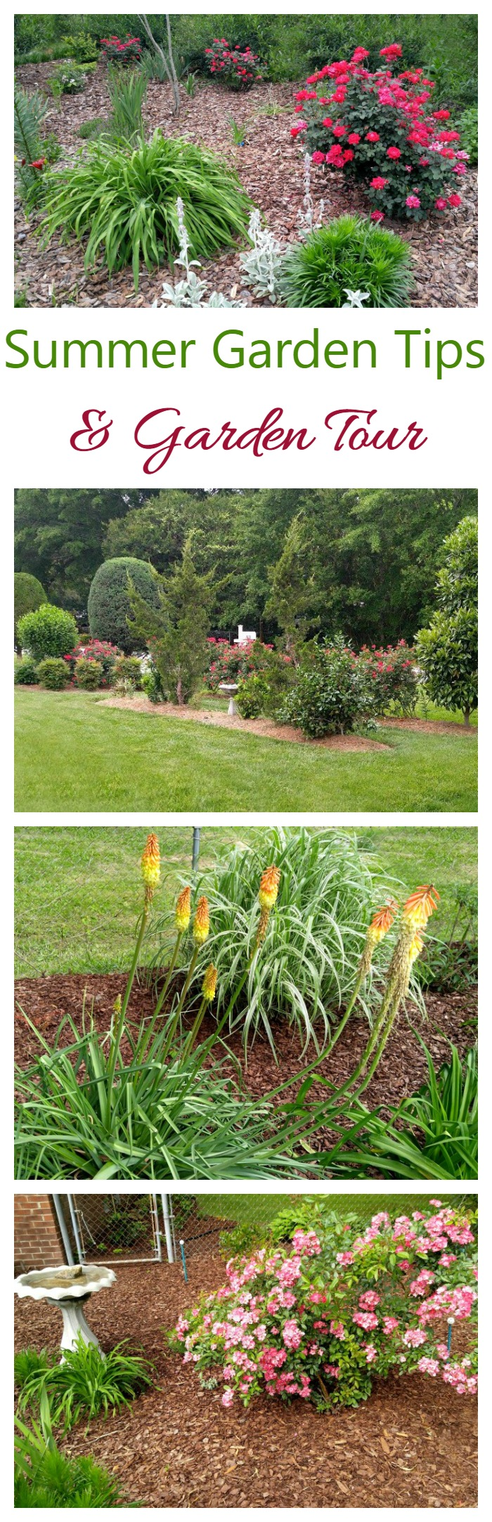 Summer garden tips to keep your lawn garden beds looking great in spite of the heat - Summer time gardening tips ...