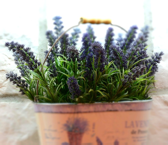 Lavender is know for it's mosquito repelling ability.