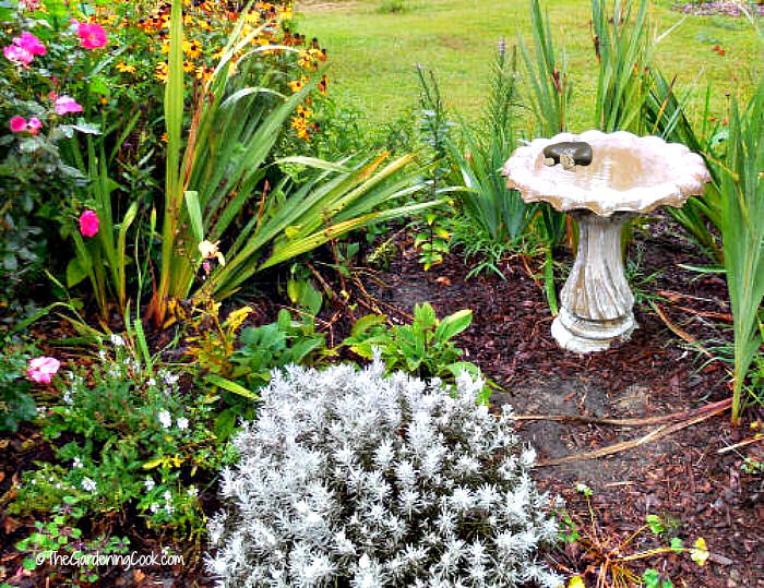 Add rocks in a bird bath to give monarchs a place to land