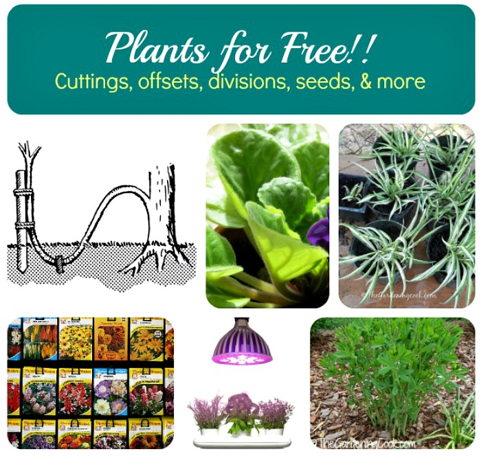 Tips for propagating all types of plants including perennials