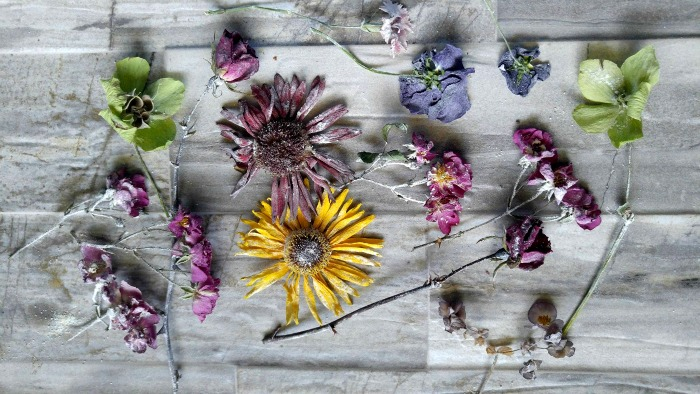 flowers preserved with Borax