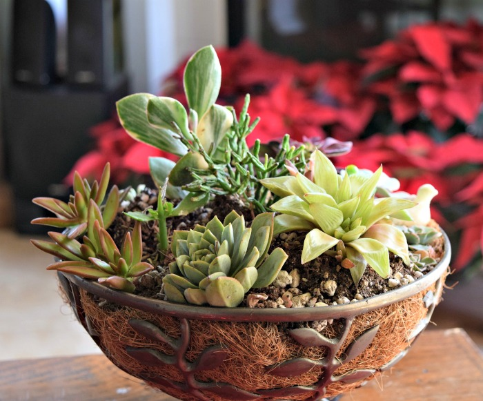 Succulent Planters 25 Fun Looks That Show You Can Plant