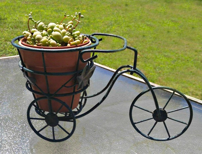 Tricycle Succulent planter is adorable