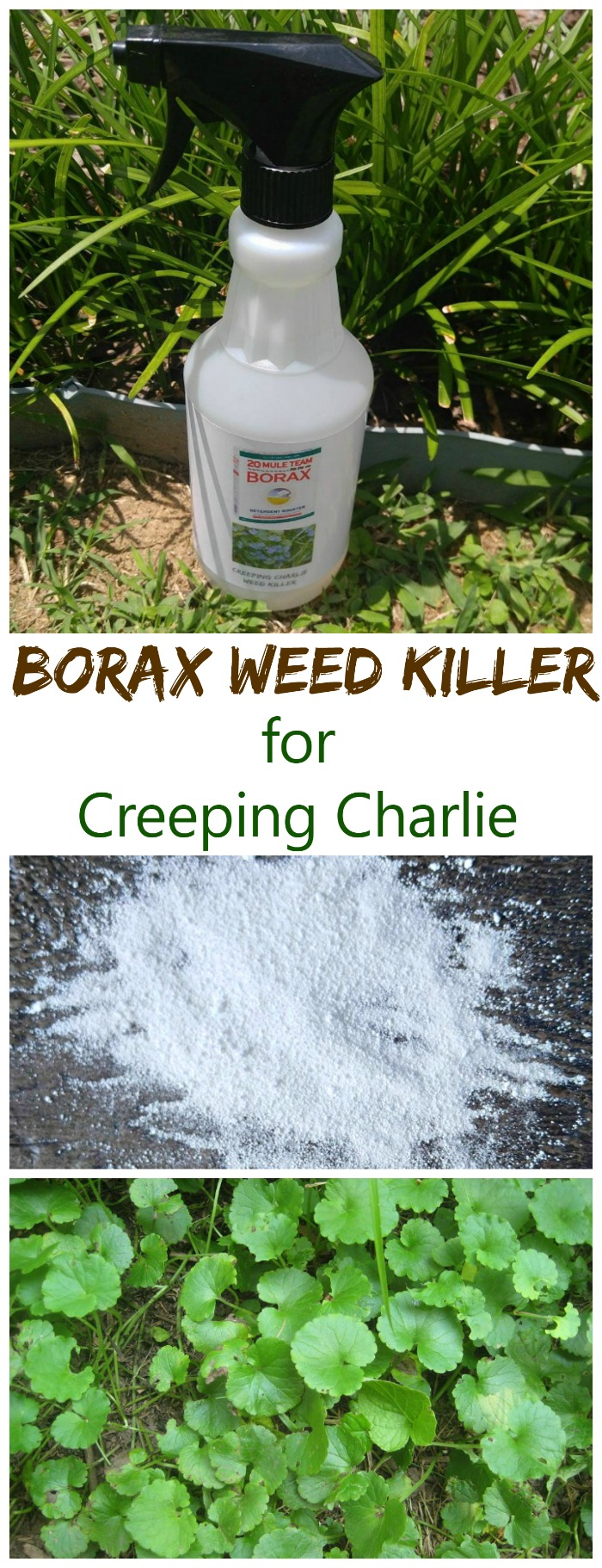 This Borax weed killer does a good job of controlling creeping Charlie in your lawns.