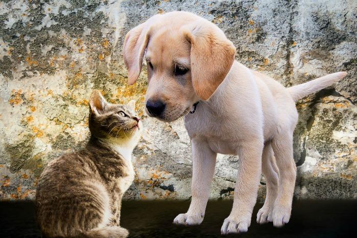 puppy and ktten