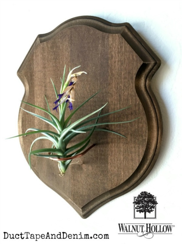 Shield air plant holder from walnuthollowcrafts.wordpress.com