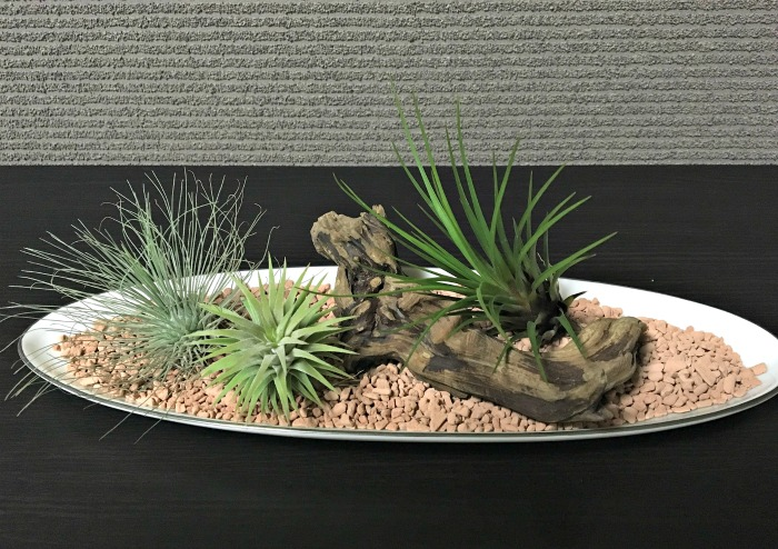Shallow bowl planter for air plants