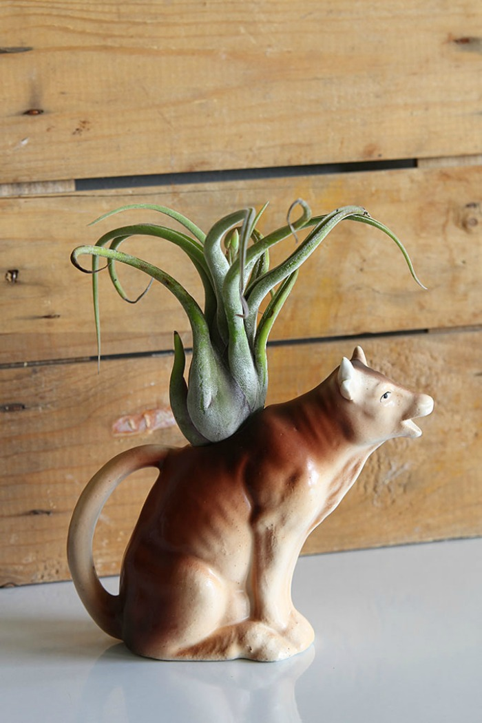 Cat planter for an air plant from houseofhawthornes.com