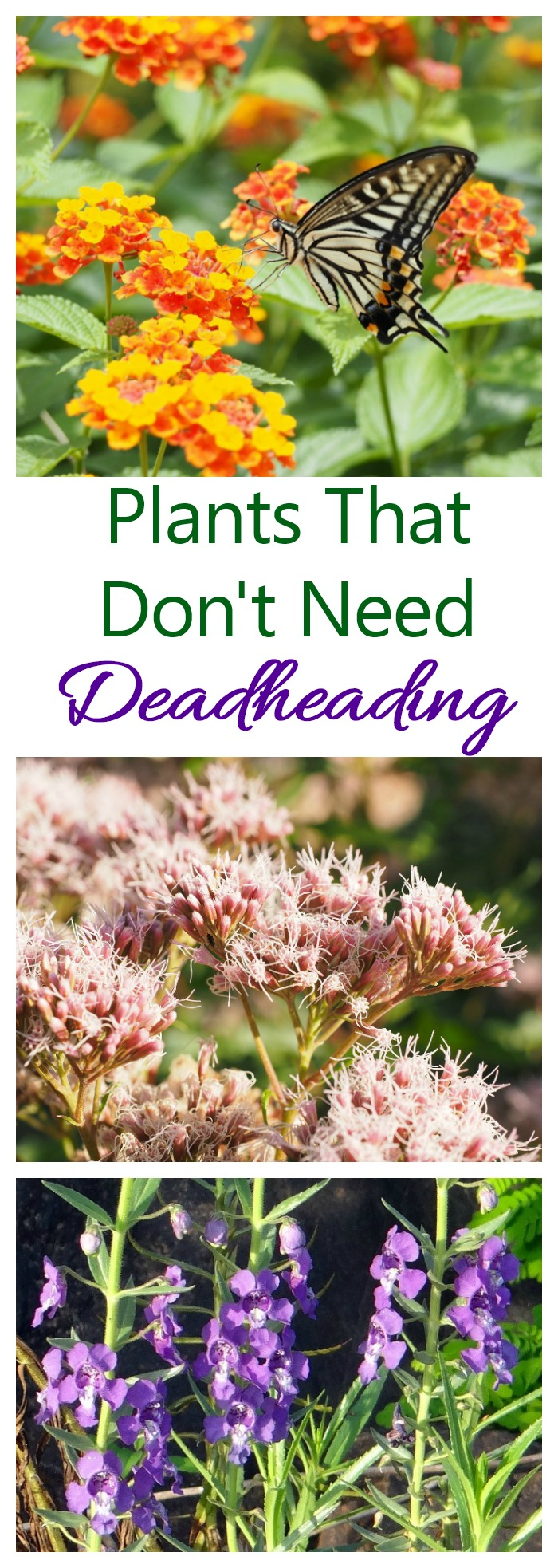 Don't spend your summer with a pair of scissors in your hand in the garden. Instead use plants that don't need deadheading