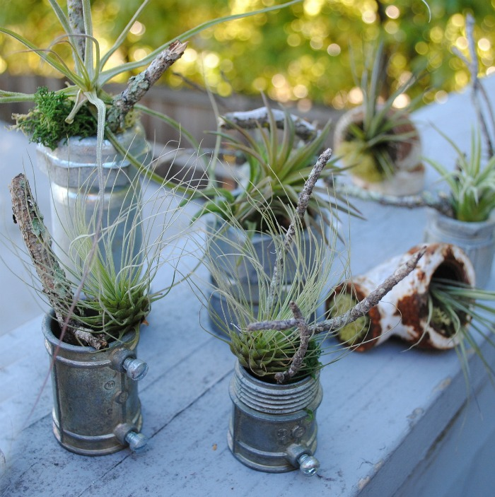 Metal air plant contairners