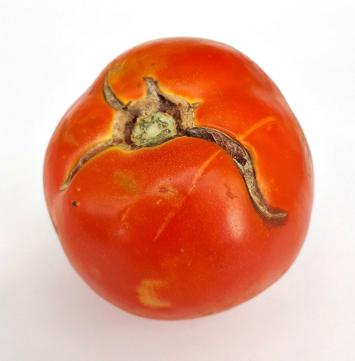 Cracked tomato skins are a cause of irregular water supply to the soil
